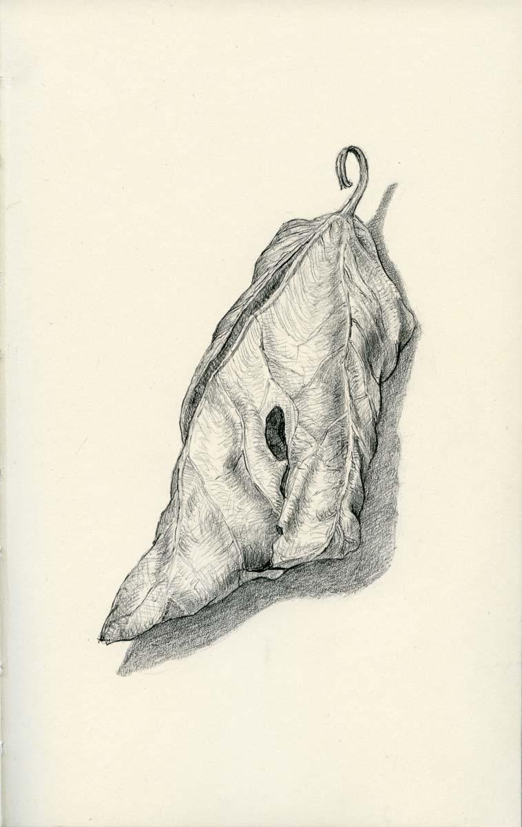 Fig leaf study